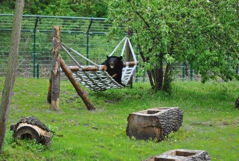Nufi na swoim nowym wybiegu. To dopiero początek wielkich zmian w Ogrodzie Zoobotanicznym w Toruniu