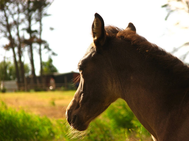 A portrait of the foal - with beard!