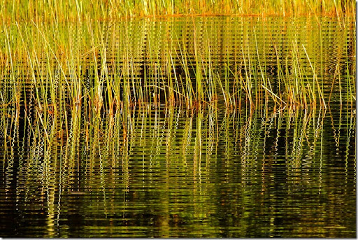 photoshare Leaves Of Grass Pocasset MA isight
