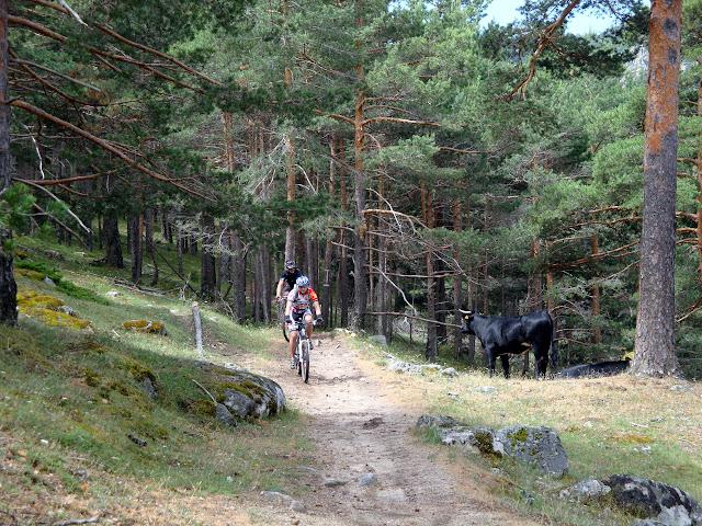 Animales en el camino