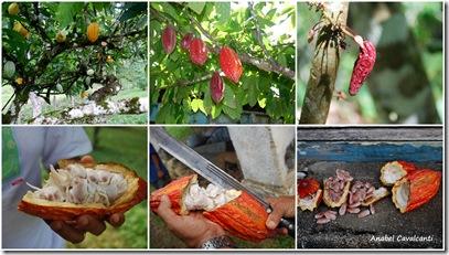 Fazenda Ouro Verde 27-06-09 2009-06-27
