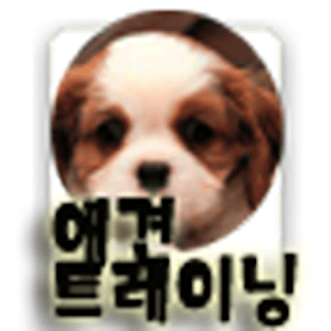 애견 훈련 매뉴얼. 클리커(Clicker) - 강아지