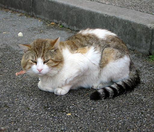 Metalcamp cat