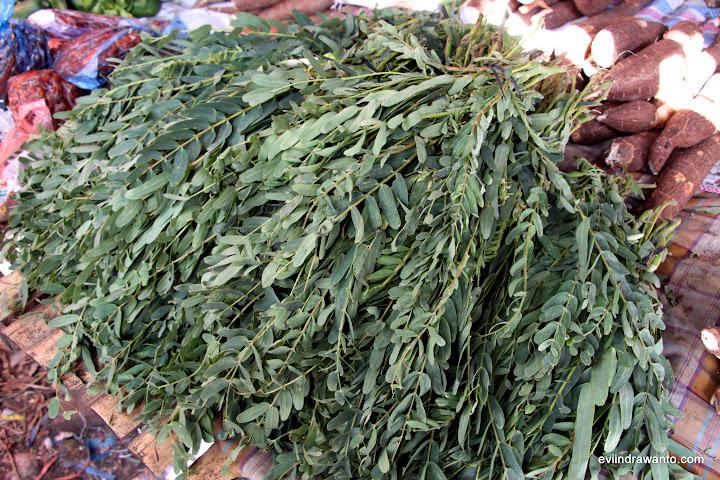 daun kelor untuk sayur