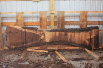 Walnut 319-12  Length 12', Max Width (inches) 38 Min Width (inches) 14 Thickness 10/4  Notes :Kiln Dried