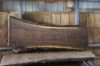 "555  Walnut -8 8/4 x  41"" x  26"" Wide x 8'  Long"