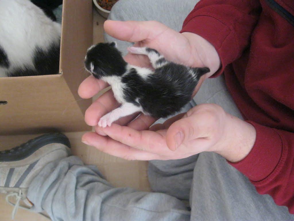 katten - 2011-02-26%2B12-07-46%2B-%2BIMG_0247.JPG
