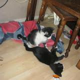 katten - 2011-04-16%2B07-46-14%2B-%2BIMG_0406.JPG