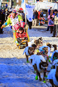 Iditarod2015_0402.JPG