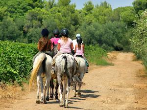 (40)promenade-cheval©CDT41-phovoir-image