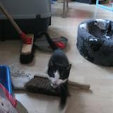 katten - 2011-04-15%2B19-06-28%2B-%2BIMG_0398.JPG
