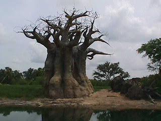0370African Safari