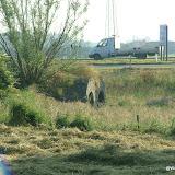 Westhoek 22 en 23 juni 2009 - DSCF8611.JPG