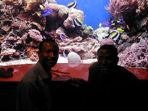 Montery Bay Aquarium, USA - 207779502_51f5539f29.jpg