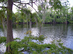 sam-houston-jones-state-park-lake-charles-la-2009 6-23-2009 2-52-22 PM 7-3-2009 10-54-16 AM.JPG
