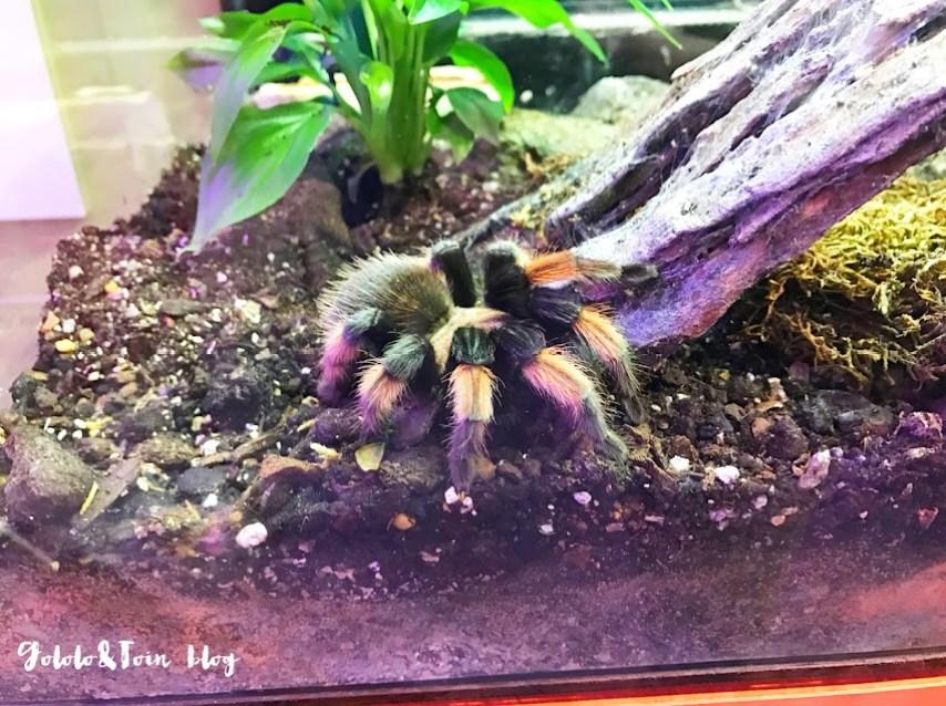 insectpark-tarántulas-centro-naturaleza-ocio-familia-madrid