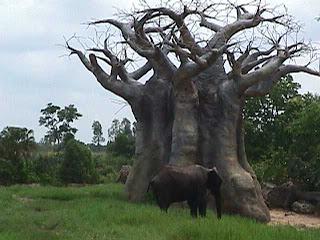 0360African Safari