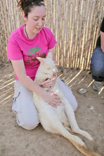 Albino Kangaroo at Roos and More Zoo Las Vegas.
