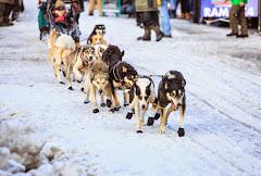 Iditarod2015_0161.JPG