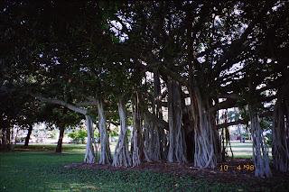 1200Memorial Gardens, The Strand