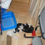 katten - 2011-04-15%2B19-07-33%2B-%2BIMG_0404.JPG