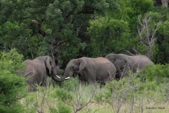 Elephant at Hluhluwe Imfolozi Game Reserve