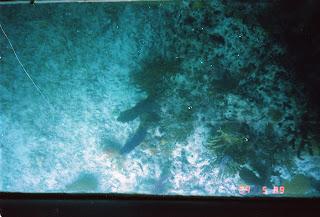 0990Under-Water Sightseeing