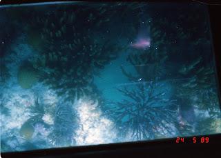 1070Under-Water Sightseeing