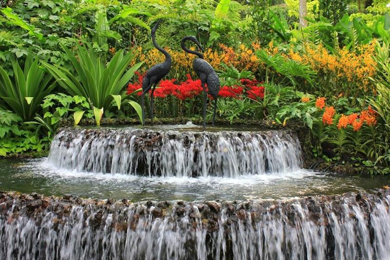 The Botanic Garden in Singapore