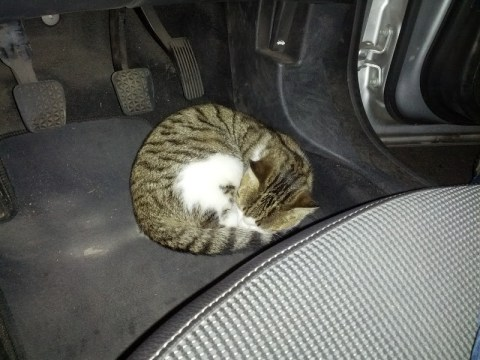 Sleeping cats make operating pedals tricky