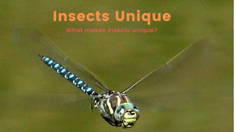 Are Insects Animals? | what is an animal | What are Arthropods?