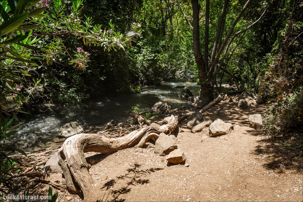 Джунгли реки Хермон - Баниас | Hermon stream from Banias to Shea Yeshuv | נחל חרמון - מבניאס לשאר ישוב | LookAtIsrael.com - Фото путешествия по Израилю