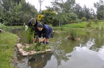 Estudiantes construyendo islas en el humedal Zasqua
