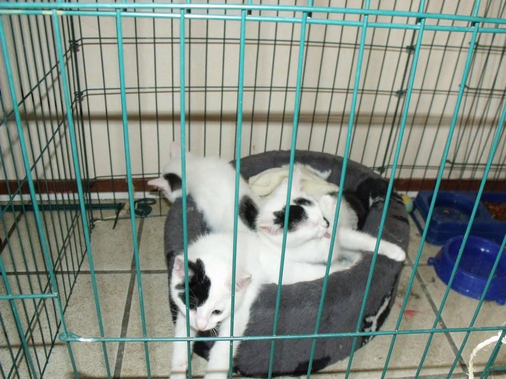 katten - 2010-07-03%2B16-17-52%2B-%2BDSCF1342.JPG