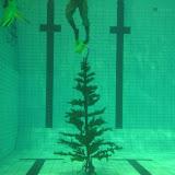 Vår vackra julgran Foto: Mats Wallin