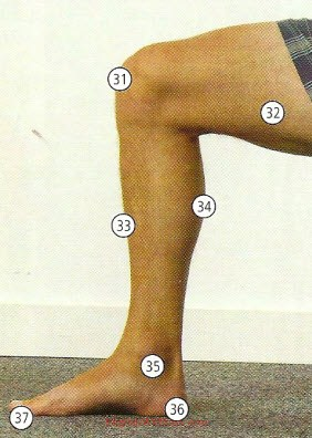 Human Body Parts Pictures with Names - Body Parts Vocabulary: Leg