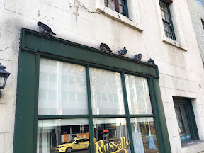 5 pigeons shelter on a ledge from the wintry winds