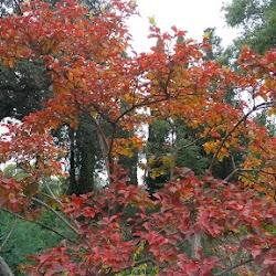 Autumn-2017-spiritual-meditation-retreat-Satguru-Sirio-Satsang19.jpg