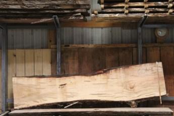 "601  Ambrosia Maple - 9 8/4x 29"" x 20"" Wide x  10'  Long"