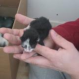 katten - 2011-02-26%2B12-08-50%2B-%2BIMG_0251.JPG