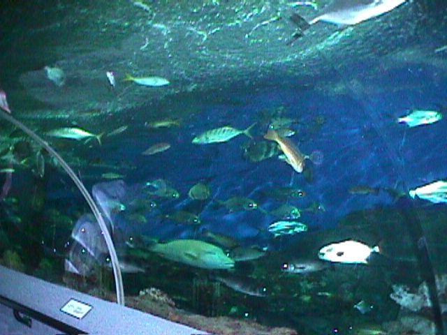 1130Aquarium Fish Schooling