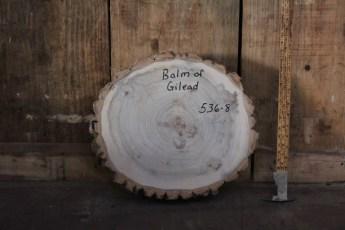 """536 Balm of Gilead -8  2 3/4""""x 14"""" Dia"""