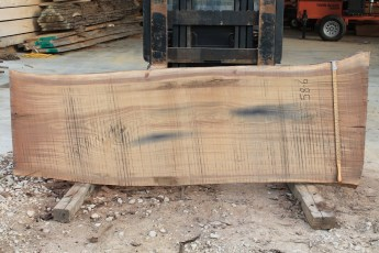 "058 - 6 Walnut  2"" x 36 - 32"" Wide x 8' Long  Kiln dried"