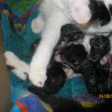 katten - 2011-02-24%2B20-02-56%2B-%2BIMG_0228.JPG