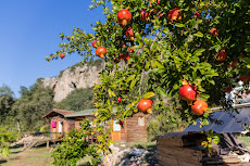 ... and pomegranates in the camp!