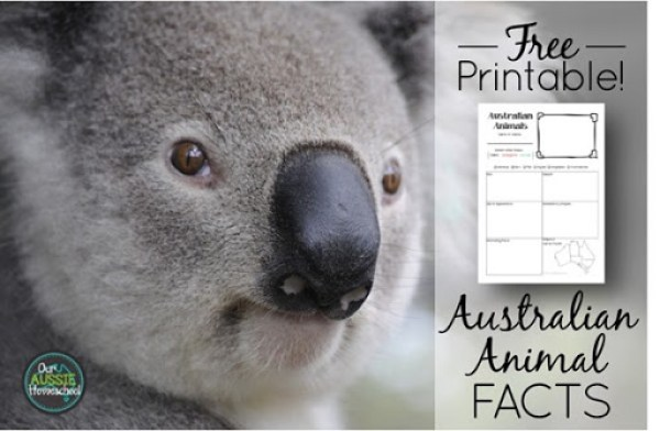 Australian Animal Fact SheetFree Printable  Our Aussie Homeschool