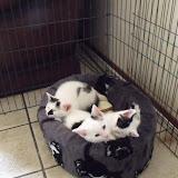 katten - 2010-06-20%2B13-18-10%2B-%2BDSCF1300.JPG