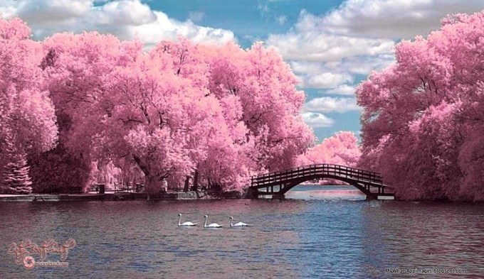 Beautiful Nature Images Hd For Dp Bestpicture1org