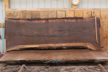 "507 Walnut -9 12/4  x  45"" x  37"" Wide x 10' Long"