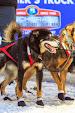 Iditarod2015_0367.JPG